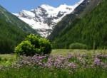 valle-daosta-prato-di-s.orso-e-gran-paradiso-cogne-foto-kondo_0